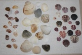 Preferences ~ As Evidenced in Shell Collection