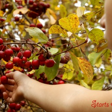 Weekly Wrap-Up ~ Fall Leaves Fall