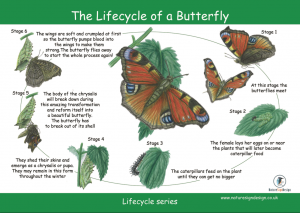 Caterpillar to Butterfly Poster