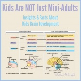 Kids Are NOT Just Mini-Adults (Kids Brain Development)