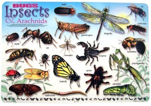 What is an Insect? from Starts At Eight