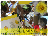Nature Study: Daffodils – Dissection, Poetry & Drawings