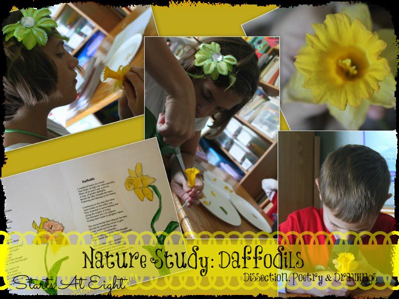 Nature Study: Daffodils