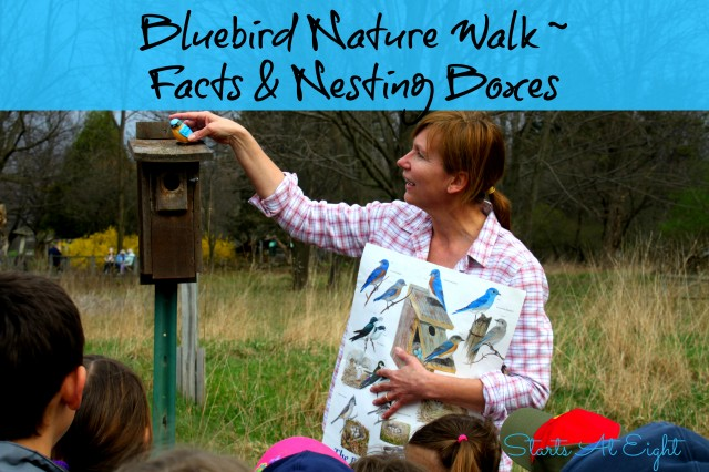 Bluebird Nature Walk ~ Facts & Nesting Boxes from Starts At Eight