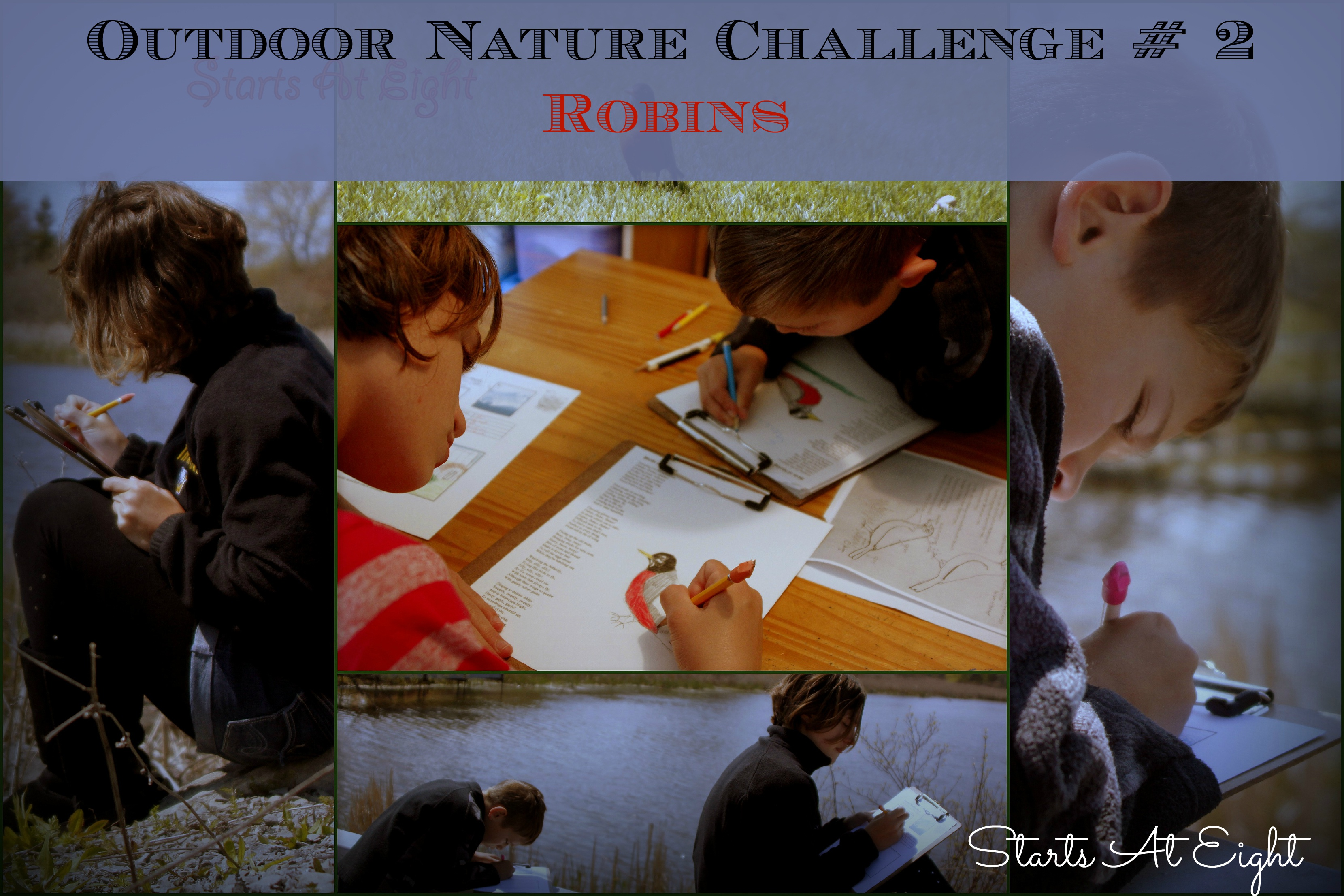 Robins – Outdoor Hour Nature Challenge #2