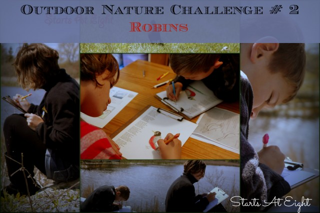 Outdoor Nature Challenge #2 - Robins