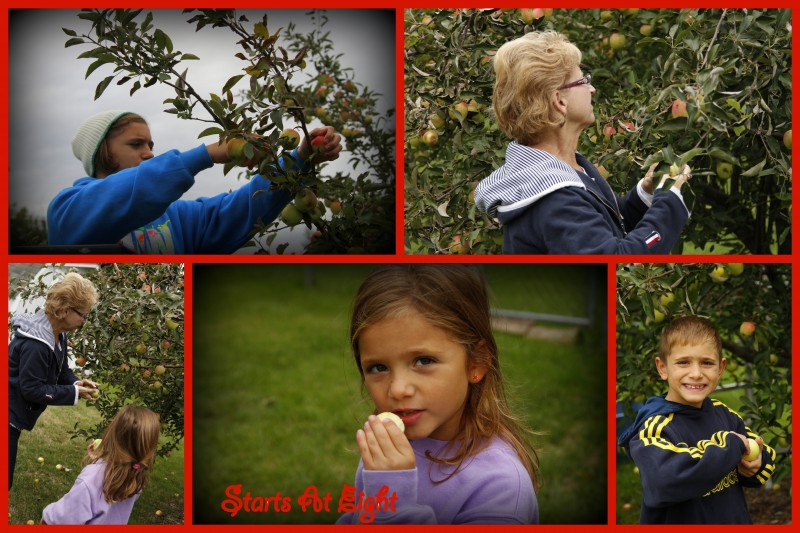Picking Apples Collage