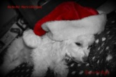 Merry Christmas ~ 2012