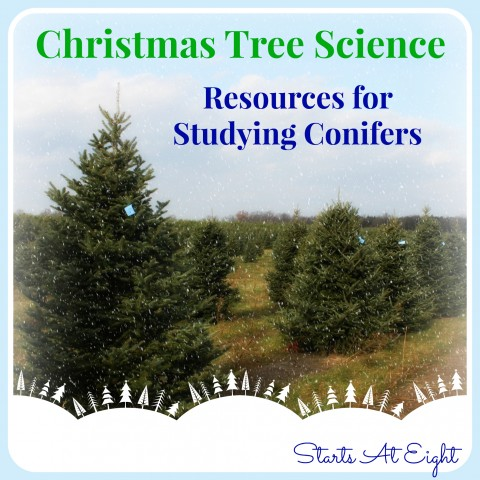 Christmas Tree Science - Resources for Studying Conifers from Starts At Eight