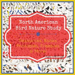 North American Bird Nature Study