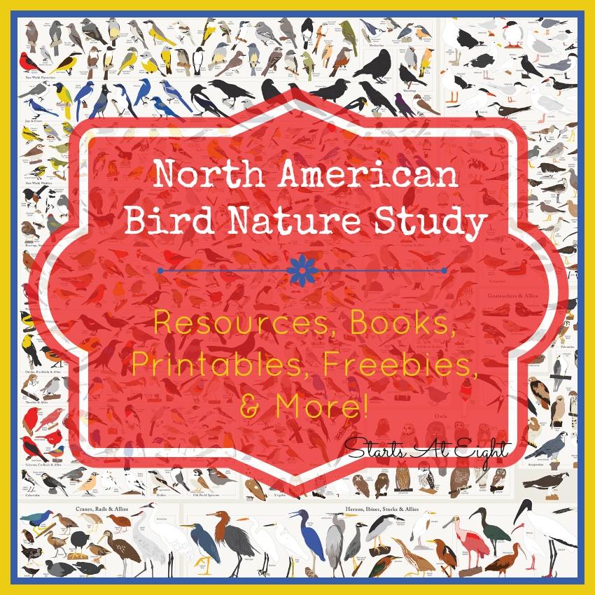 North American Bird Nature Study