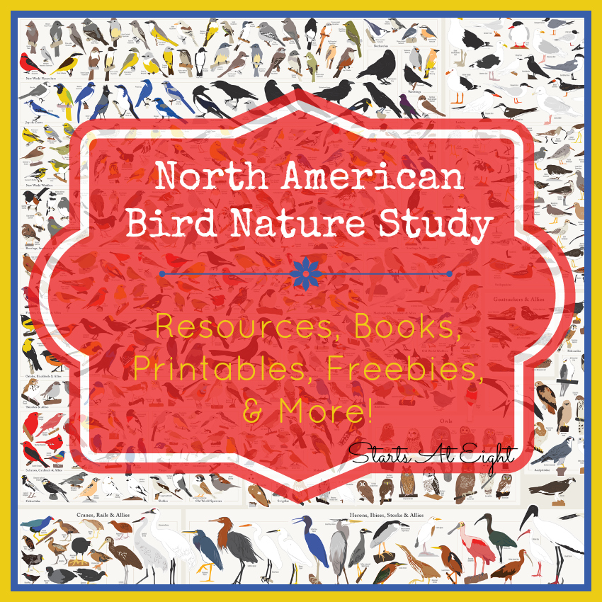 North American Bird Nature Study - Resources, Books, Printables, Freebies & More! from Starts At Eight