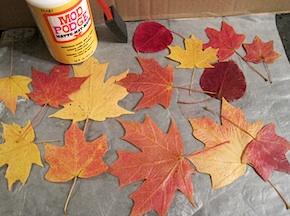 Preserve Fall Leaves