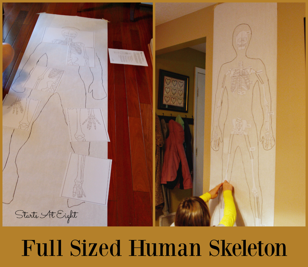 full-sized-human-skeleton