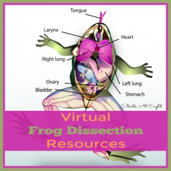 Virtual Frog Dissection Resources