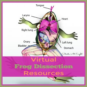 Virtual Frog Dissection Resources from Starts At Eight. For those that don't have the resources (or the stomach) for a frog dissection, there are plenty of virtual frog dissection resources to choose from! Check out these websites, apps, videos, printables and more!