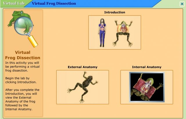 Virtual Frog Dissection Resources StartsAtEight – Frog Dissection Worksheet