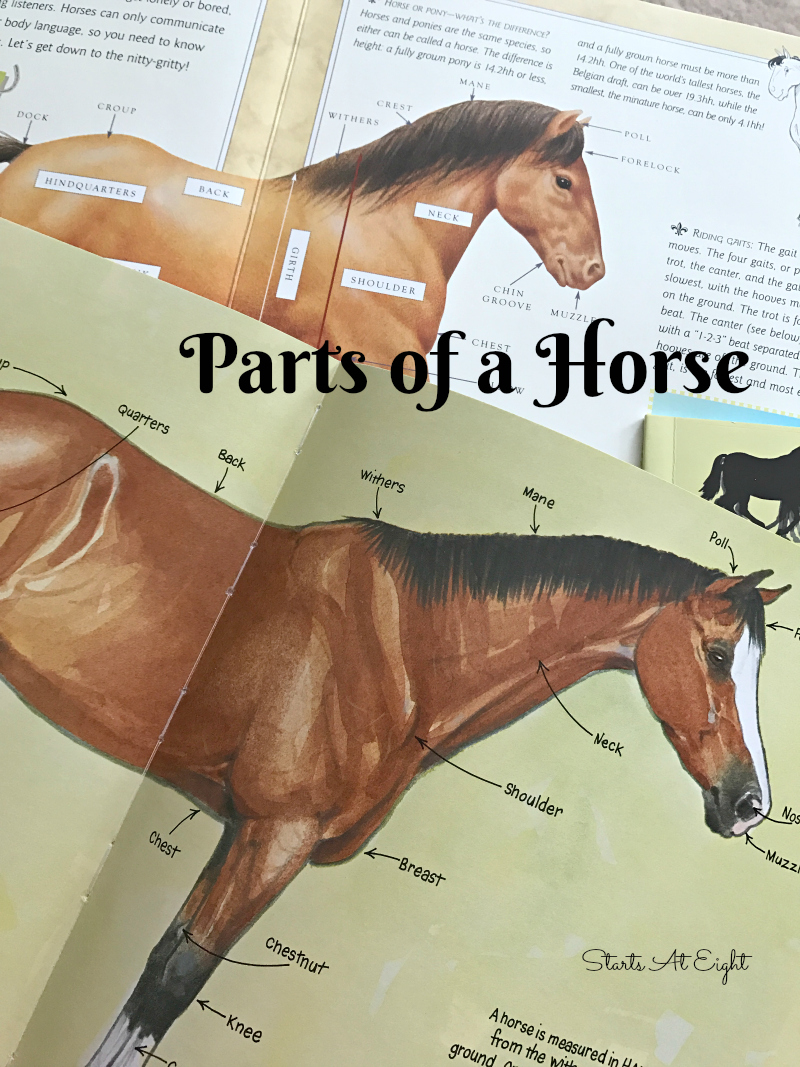 image regarding Grooming Tools for Horses Printable Worksheet known as Having Horse Experiences for a Horse Machine Review No cost Printable