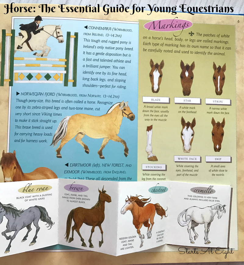 image relating to Grooming Tools for Horses Printable Worksheet identify Making use of Horse Studies for a Horse Device Investigation No cost Printable